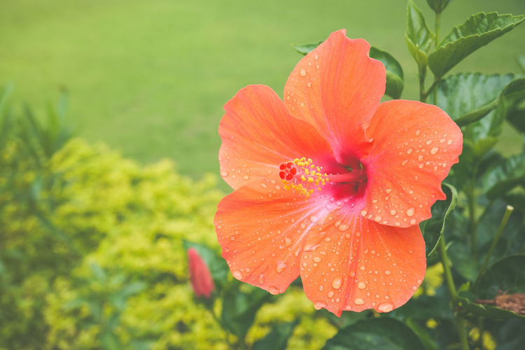 Flower in