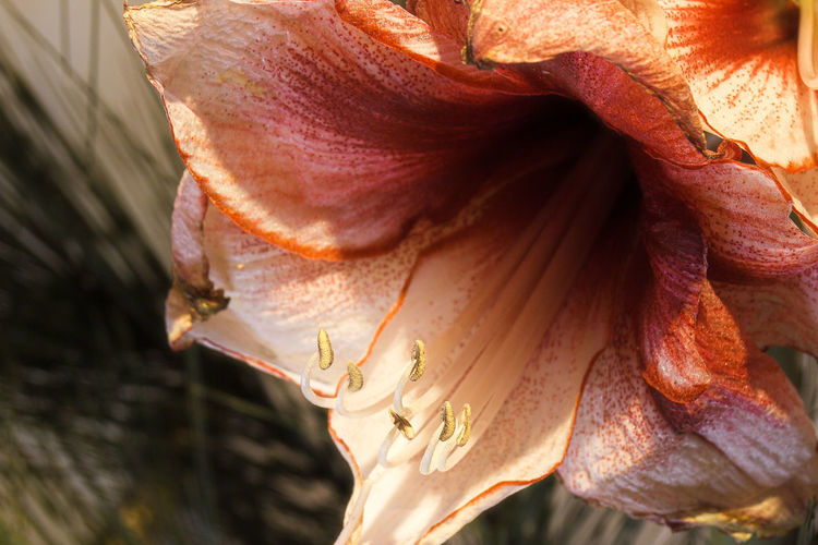 Close-up of wilted flower in sunlight
