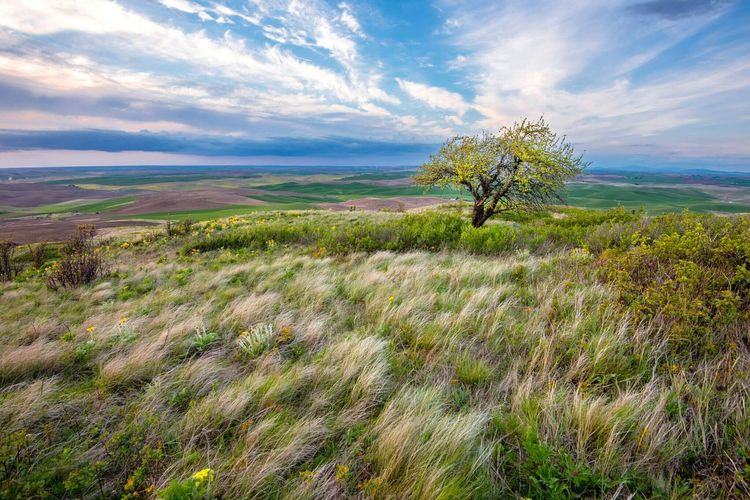 I really like this spot Steptoe Butte Pullman Palouse  Landscape_Collection Landscape Outdoors Outdoor Photography Myspot