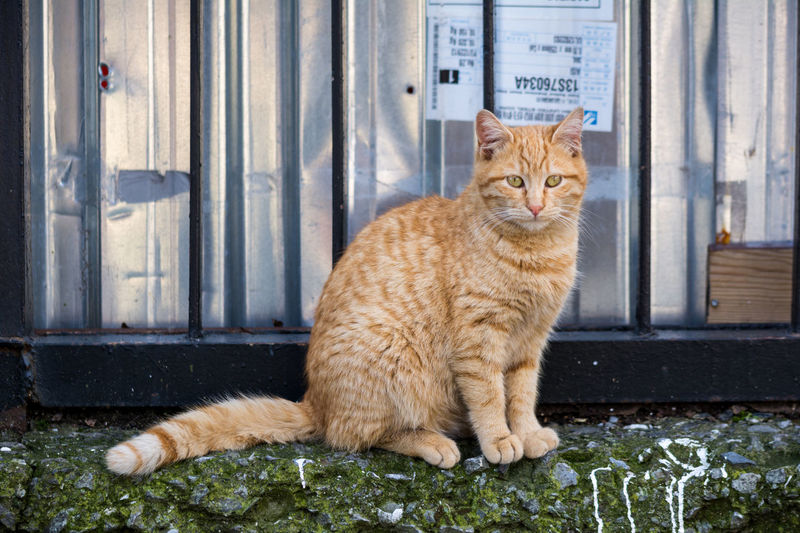 Cats of Istanbul Animal Cat Cat Portrait Cats Cats Of Istanbul Europe Feline Feline Portraits Istanbul Nature Ottoman Empire Stray Cat Street Cat Travel Turkey Turkish Türkei Türkiye