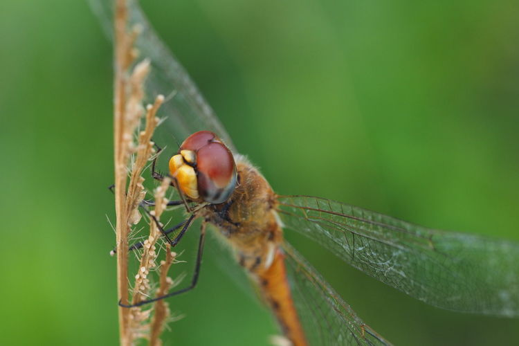 Close-Up Of Dragonfly On Stick