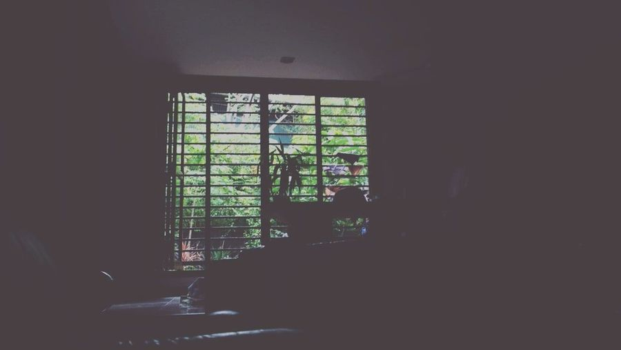 Home Nature Nature_collection Green Window Home Sweet Home Miss Enjoying Life Relaxing Trees