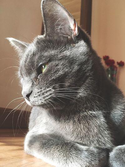 Cat Cat Of The