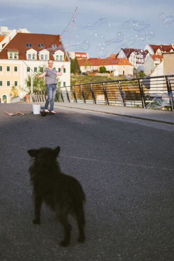View of a dog on the road