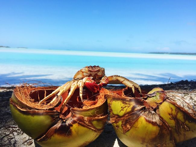 My Favorite Place Aitutaki Cook Islands Beauty In Nature Lagoon Coconut Crab Holiday Beach