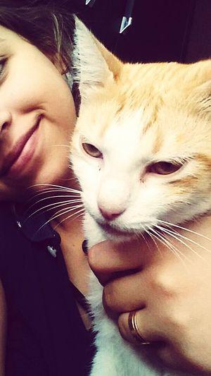 Pets Domestic Animals Domestic Cat Friendship Two People Amor Duasgatinhas