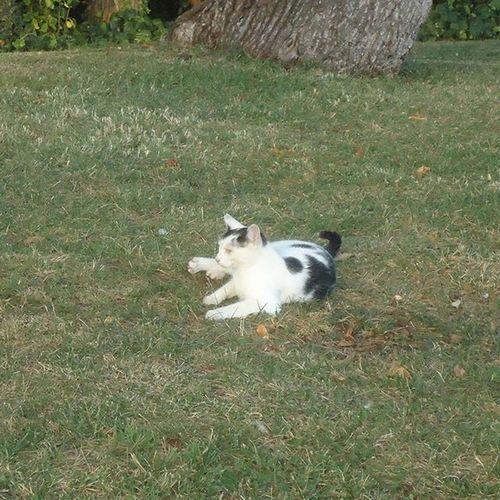 Cat Gato Kissa Catingrass Streetcat Gatoenlahierba Gatocallejero Katukissa Parquecervantes Parque  Park Puisto Barcelona Bcnexploradores Bcnexplorers Thebarcelonist