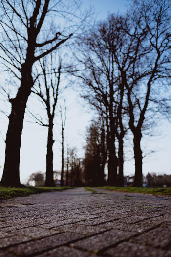 IN THE FIELDS Tree Plant The Way Forward Direction No People Road Selective Focus Nature Bare Tree Tree Trunk Tranquility Sky Trunk Day Surface Level Transportation Outdoors Footpath Beauty In Nature Diminishing Perspective Treelined Long Fujifilm