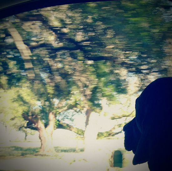 Motion Photography In Motion Shotgun Rider Lookingoutthewindow Germanshorthaironboard Loner Life Blurred Effect Imasmalltown
