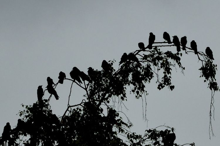 Low angle view of silhouette birds perching on tree against sky