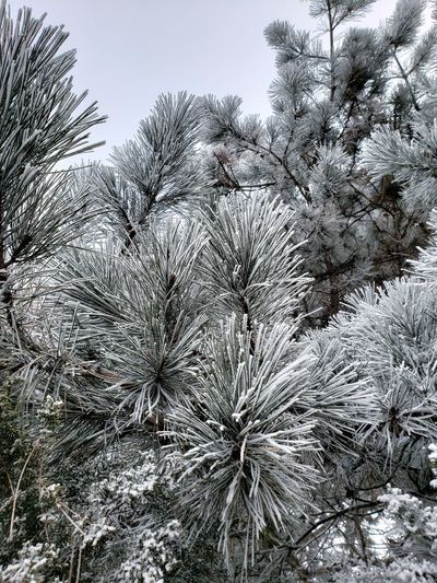 Trees in the winter 👌 Frost Minneapolis No People Beauty In Nature Joy Outside Frosty Mornings Tree Backgrounds Full Frame Close-up Sky Snow Covered Cold White Snow Cold Temperature Winter
