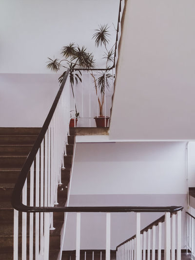 Geometric staircase. Built Structure Composition Creative EyeEm Best Shots Film Look Minimalism No People Palm Tree Pastel Colours Railing Retro Styled Staircase Steps Steps And Staircases Tree Vintage