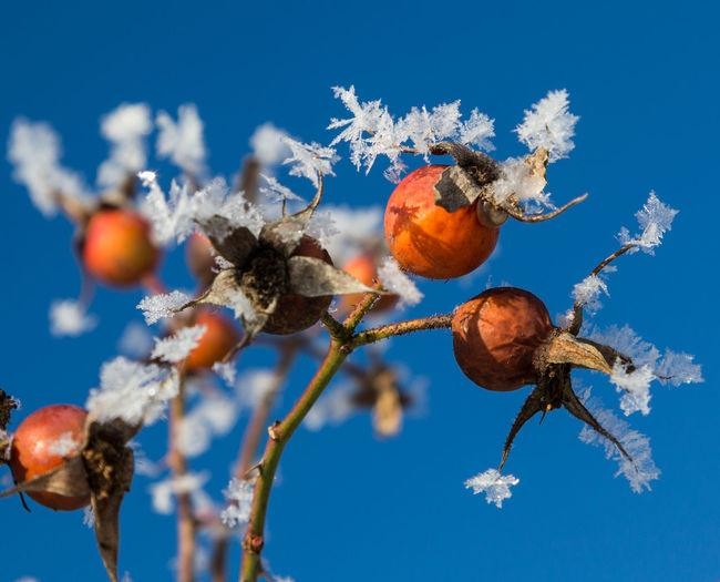 Low angle view of flower tree against blue sky