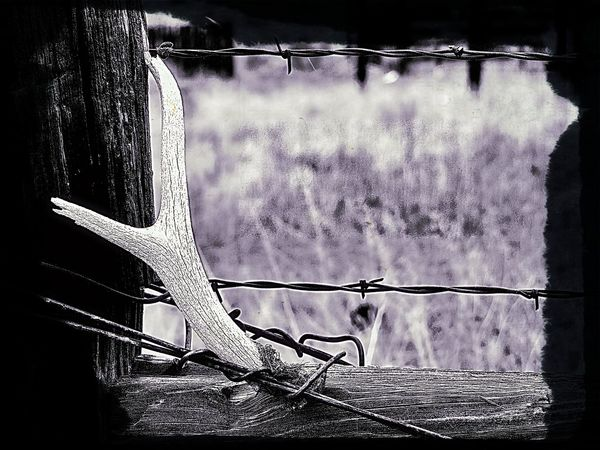 Antler Barbed Wire Close-up Cloud - Sky Day Nature No People Outdoors Sky Tranquility Weather Wyoming