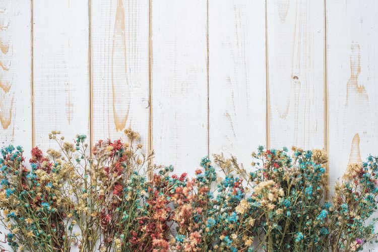 Full frame shot of flowering plants against wall