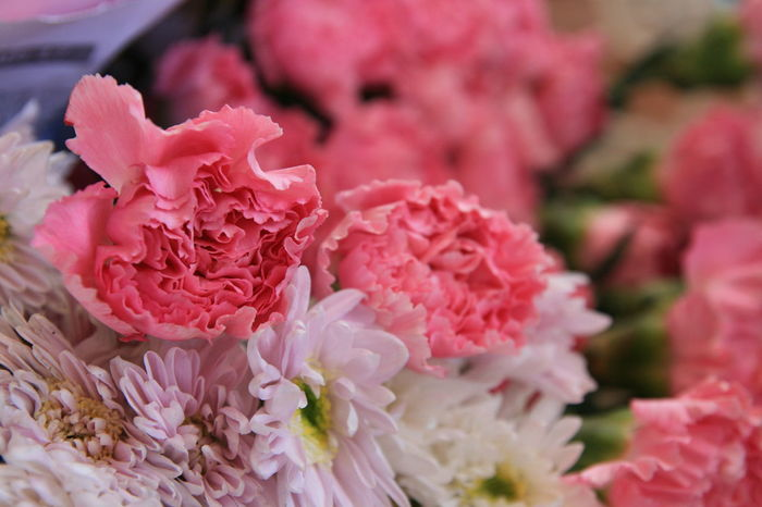 Pink Color Flower Petal Peony  No People Fragility Flower Head Close-up Plant Nature Beauty In Nature Day Outdoors Freshness Carnation Flowers Carnation Pink Pink Beautiful Flowers Flower Market Carnation
