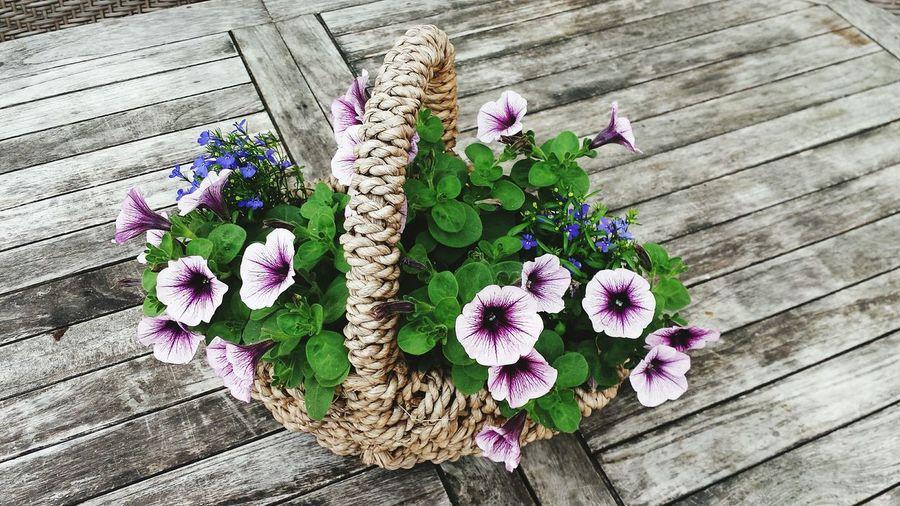 Nature Photography Frühlingserwachen Garten Natur Nature Blütenzauber Blütenschönheit Blütezeit Blütenfreude Blumenpracht🌺🍃 Blumenkorb