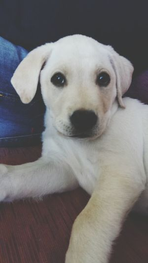 Dog Face Aslan Ilovemydog