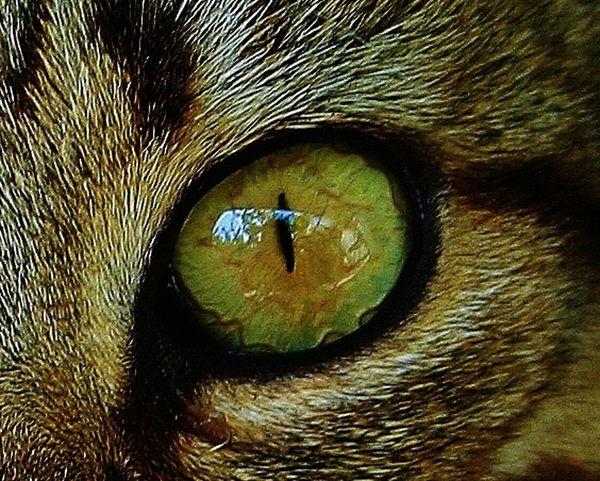 Cats Eye Close Up Nature Macro Beauty Close Up Photography Macro_collection Close-up Macro Nature Macro Photography Cat Lovers Cat♡ Nature Nature_collection Animals Macro Cat Macro Week Macro_art Macrophotography Closeup Eyes Eye Reflections