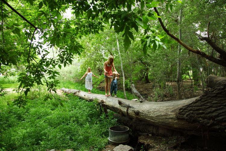Sibling Walking On Fallen Tree In Forest