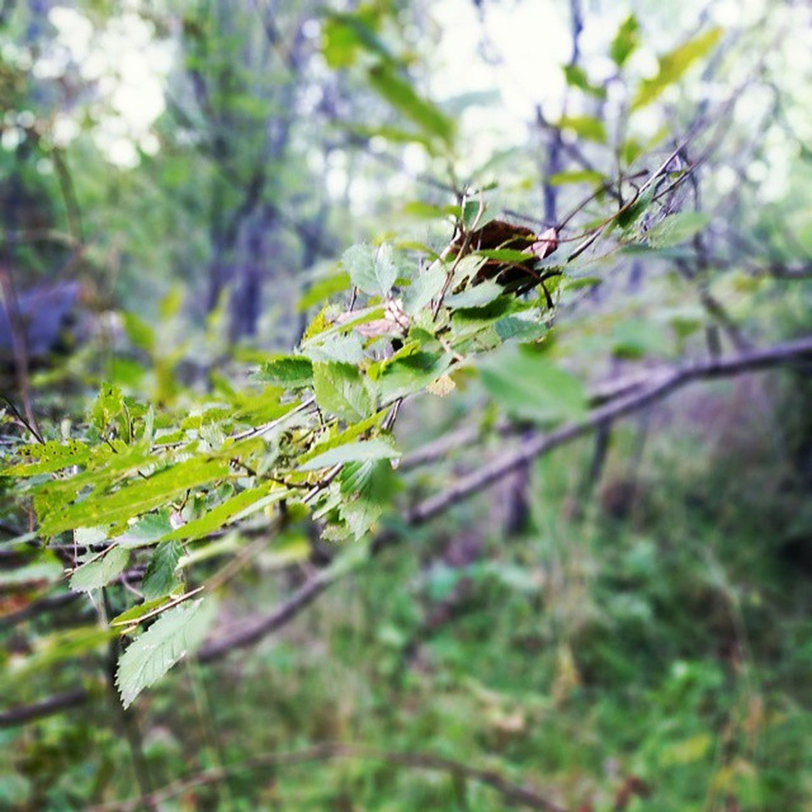 growth, focus on foreground, plant, nature, flower, close-up, selective focus, beauty in nature, stem, freshness, insect, green color, fragility, day, branch, tree, outdoors, field, no people, twig