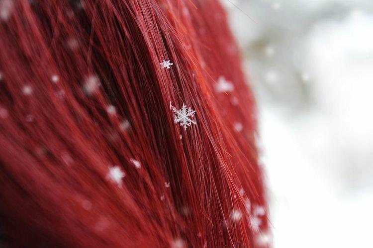 Red for winter Red Bokeh Getting Inspired EyeEm Best Shots Winter Snow Snow Flake Macro Nature EyeEm Red Hair Rethink Things