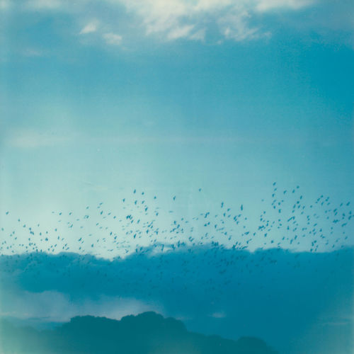 Analogue Photography Film Photography Polaroid Cloud Birds Clouds And Sky Flying Horizon Landscape Migrating Migratory Birds Sky
