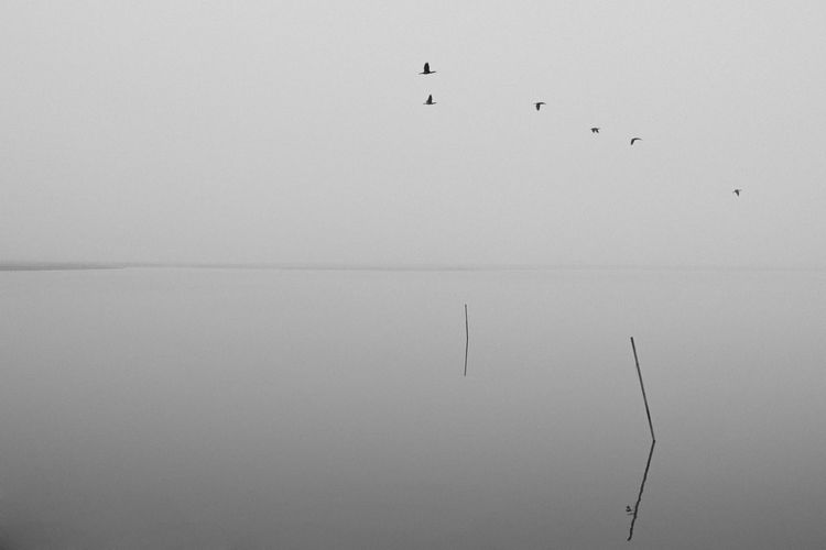 Animal Themes Animal Wildlife Animals In The Wild Beauty In Nature Bird Black & White Black And White Blackandwhite Clear Sky Day Flock Of Birds Flying Korea Lake Large Group Of Animals Lnlphotofarmphotography Mid-air Nature No People Outdoors Scenics Silhouette Sky Tranquility Water