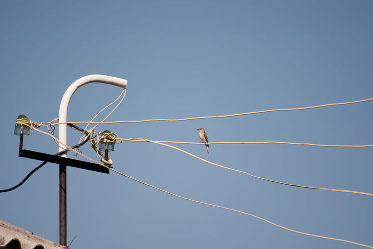 Animal Themes Animal Wing Animals In The Wild Avian Bird Blue Cable Clear Sky Day Flying Low Angle View No People Perching Power Line  Wildlife Zoology