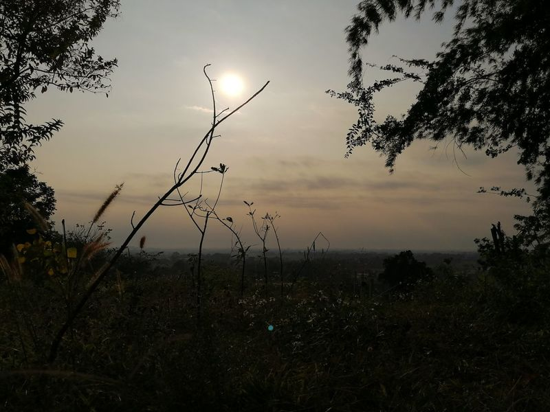 sunset or sunlight Peace Peaceful Chiangrai Sunset Beauty In Nature Tree Grass Close-up Day Rural Scene Water