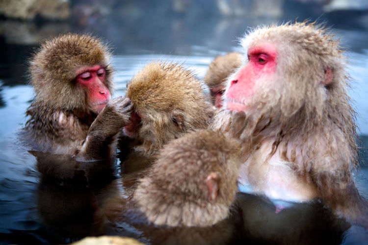 Close-Up Of Monkeys In Water
