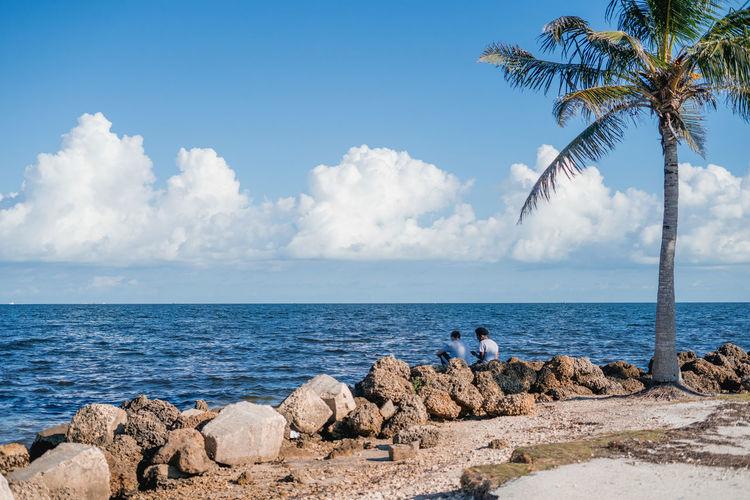Palm Tree Ocean