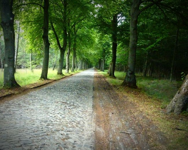 Nature No People Trees Alley Of Trees Copplestone Green Color Outdoors Old Road