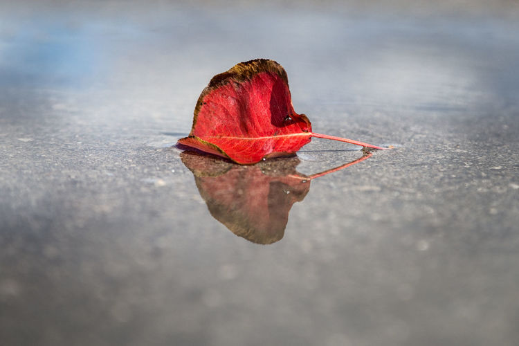 Autumn! Autumn Beauty In Nature Change Close-up Day Dry Fragility Leaf Nature No People Outdoors Red