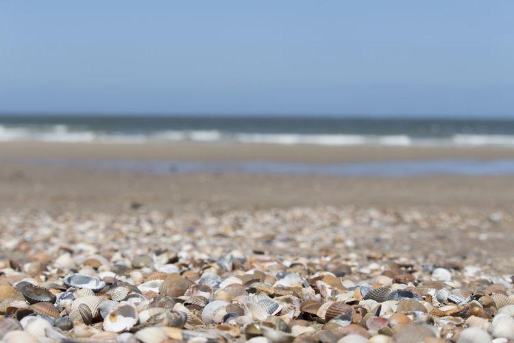 View of seashells on beach
