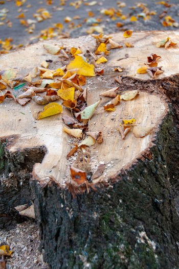 High angle view of fallen leaves on tree trunk