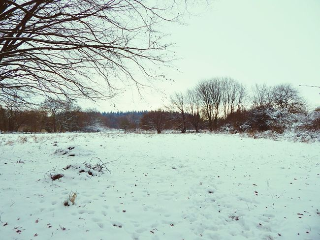 Hello World Hugging A Tree Forest Nature Snow Landscape Nature_collection Starting A Trip