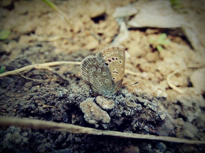Butterfly , macro , Notes From The Underground