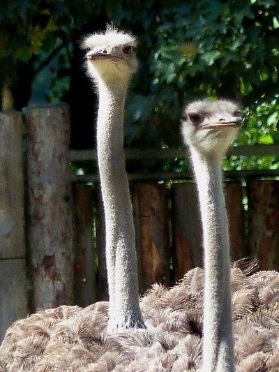 Heikobo Tiergarten Straubing Tiere Straubing