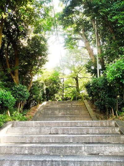 Hi! Hello World Taking Photos Stairs Day Enjoying Life Check This Out Green Tree Sloping Road No People Sunny Day Trees Green Nature Beauty In Nature Landscape TOWNSCAPE Summer2016 Kurashiki Japan 倉敷 The EyeEm Collection Premium Collection