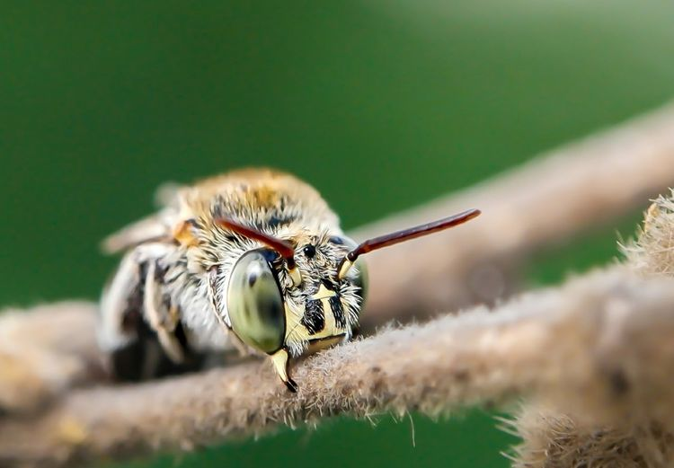 Close-up of bee