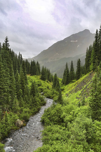 Beautiful rainy day in the mountains of Colorado Cloudy Colorado Exploring Green Rain Telluride Trees Wanderlust Adventure Evergreen Forest Kerry Estey Keith Landscape Lizard Head Pass Mountain Mountain Range Mountains Peak River San Juan Mountains Sky Stormy Trestle Trout Creek Water