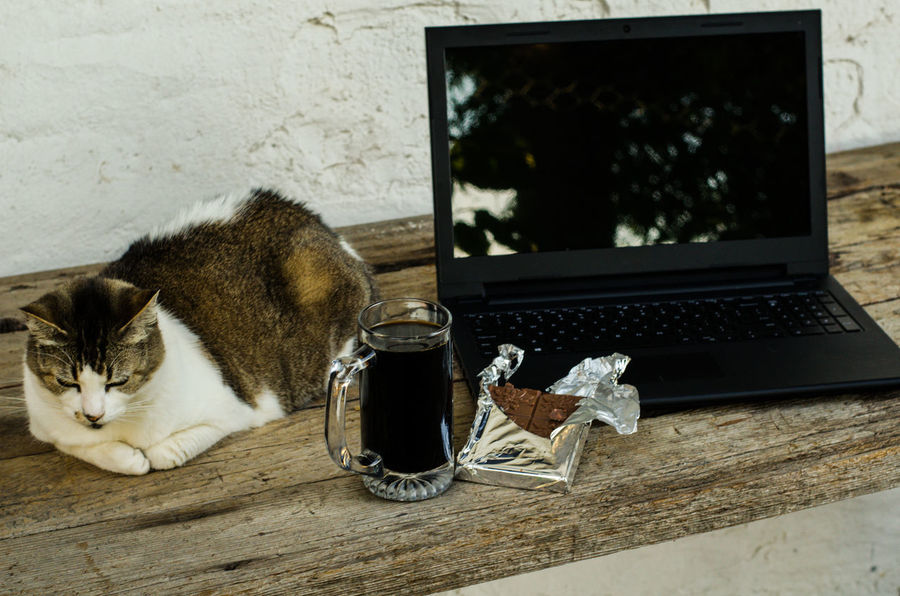 Work sweetened a bit by company of cat, chocolate and coffee! Black Color Break From Work Break Time Chocolate Close-up Coffee Coffee Time Computer Computer Time Day Domestic Cat Laptop Mammal No People Pets Work Working Working Hard