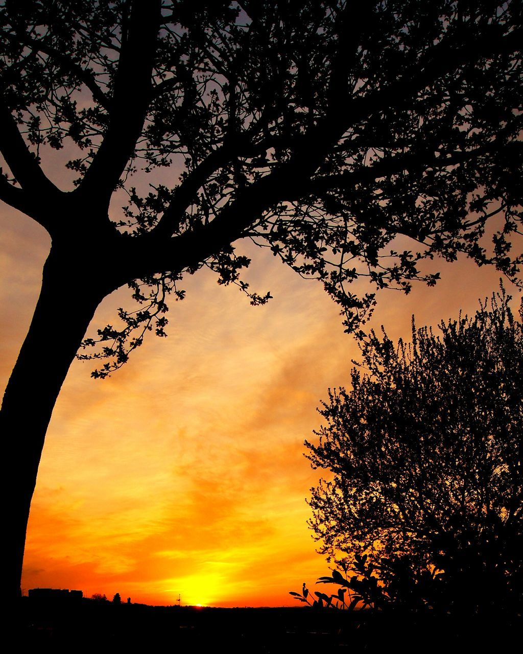 tree, sunset, silhouette, beauty in nature, nature, scenics, sky, tranquil scene, tranquility, no people, growth, outdoors, branch, cloud - sky, low angle view, tree trunk, day