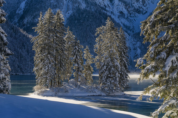 Scenic view of snow covered trees during winter