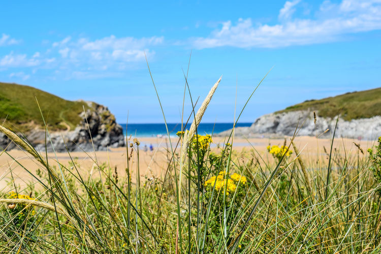 frame the most lovely beach with beauty Summer Beautiful Colours In Nature Calm Cornwall Unspoilt Landscape_photography Cornwall, UK. Eyeemphotography Exceptional Photographs Water Flower Sand Dune Marram Grass Uncultivated Blue Sky Timothy Grass Reed - Grass Family Shore Coast Calm