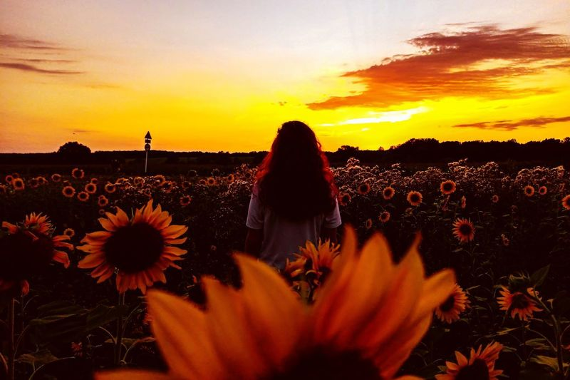 Rear view of woman standing by flowering plants during sunset