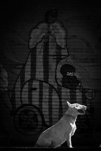 My Dog Bullterrier Muza I Love My Dog Bullterrieringles Blackandwhite Popular Photos Musa Perfil Dog