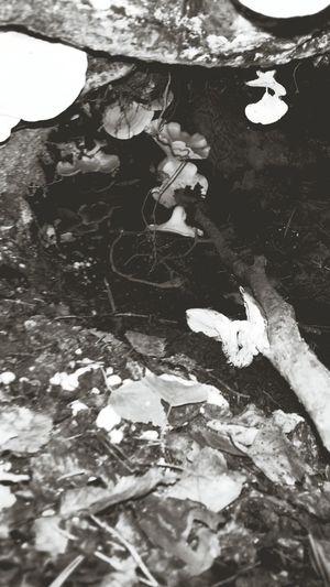 Fårtickornas grotta! Magic Mushrooms Svampar Fårticka Nature