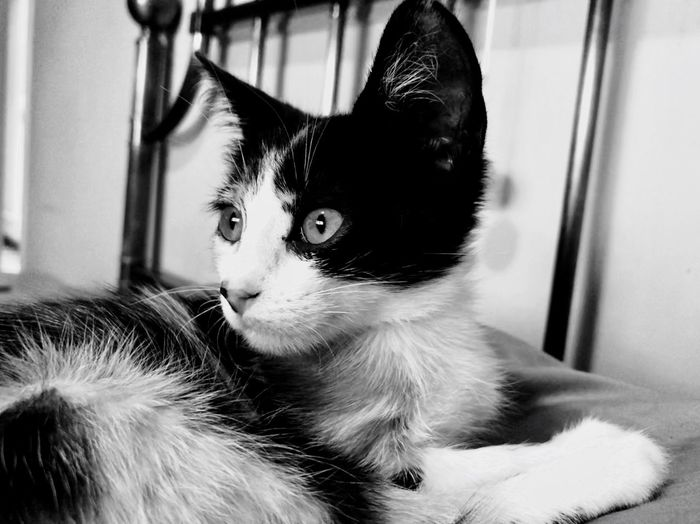 Agatha❤️ Best EyeEm Shot The Week on EyeEm Cat Domestic Cat Animal One Animal Pets Animal Themes Domestic Feline Domestic Animals Indoors  Home Interior Close-up Looking Away Looking Animal Body Part Vertebrate No People